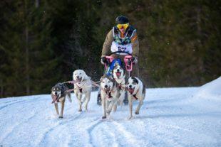2021-1-29-Kinzigtal-privat-Hundeschlitten-IMG_4276