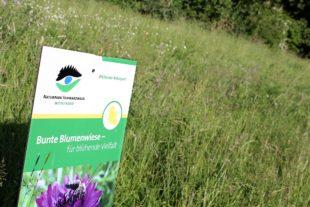 2021-2-19-Bühlertal- Wildblumen 2021_02_18_Naturpark gibt Tipps für Wildblumen-Aussaat03