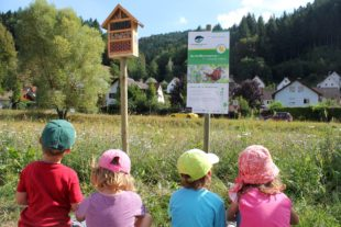 Naturpark gibt Tipps zur Einsaat einer Wildblumenwiese