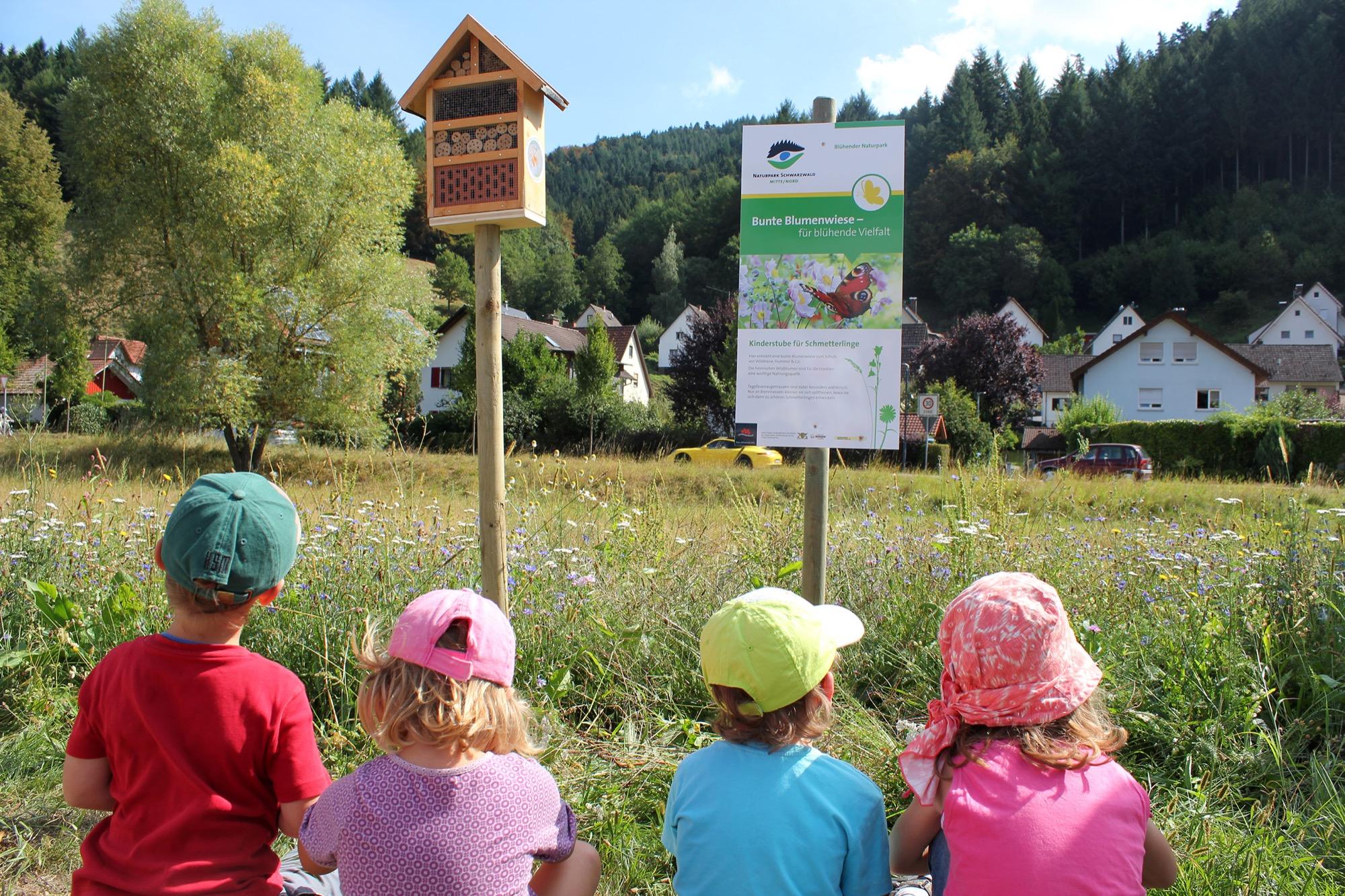 2021-2-19-Bühlertal- Wildblumen 2021_02_19_Naturpark gibt Tipps für Wildblumen-Aussaat02