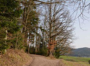 Stadtwald ist ökologisch wertvoll