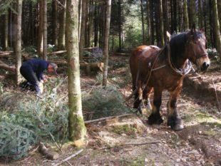 Der Schwarzwald: Vom Urwald zum Nationalpark