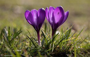 Blütenzauber ins Postfritze Park