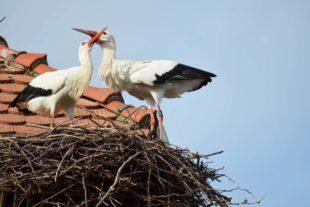 Alle Nester sind nun besetzt
