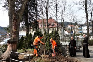 Am Gnadenbrunnen zum Marien-Feiertag Linde gepflanzt