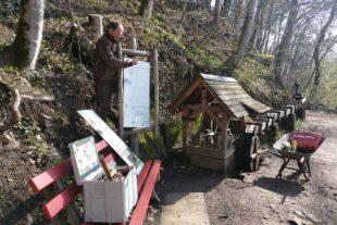 Naturerlebnispfad erstrahlt nach Baumfällarbeiten in neuem Glanz