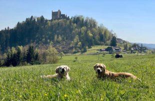 Vorverlegte 1.-Mai-Wanderung zur GeroldseckBiberach