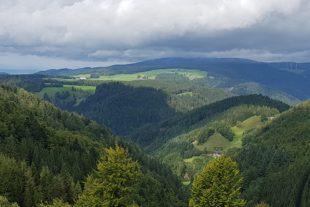 Grüne Zukunftsbranche Holz als Chance für Waldbesitzer