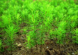 Wald und Holz - Das ist unser Ding