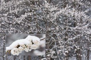 Mehr Schnee im April als im Dezember…