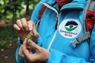 Ausbildung zum Schwarzwald-Guide des Naturparks Schwarzwald