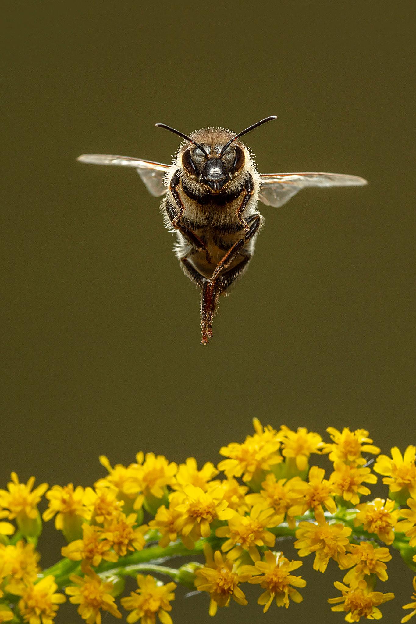 Honeybee Story