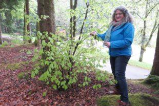 Beim Waldbaden die heilsame Wirkung der Natur erleben