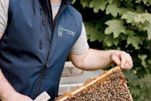 Mehr als nur Honig